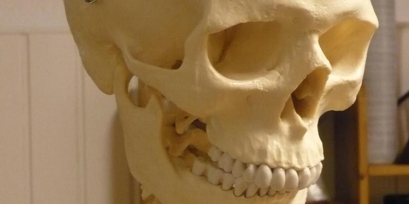 Doctor Bone