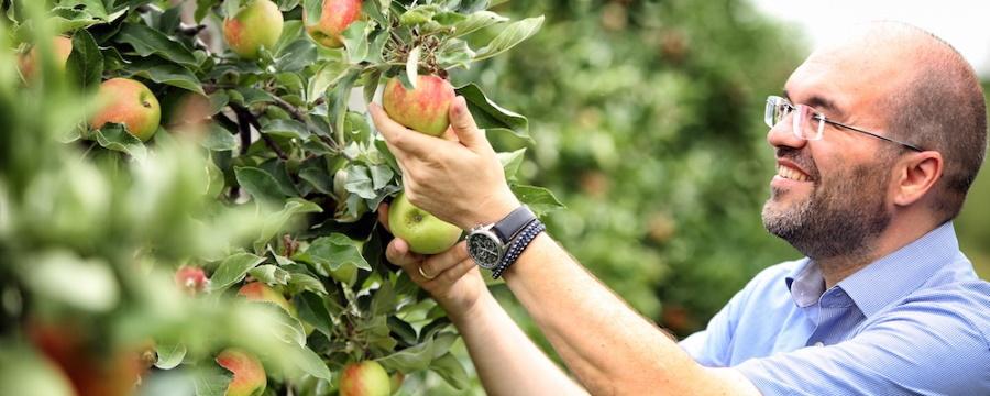 In der Apfelplantage